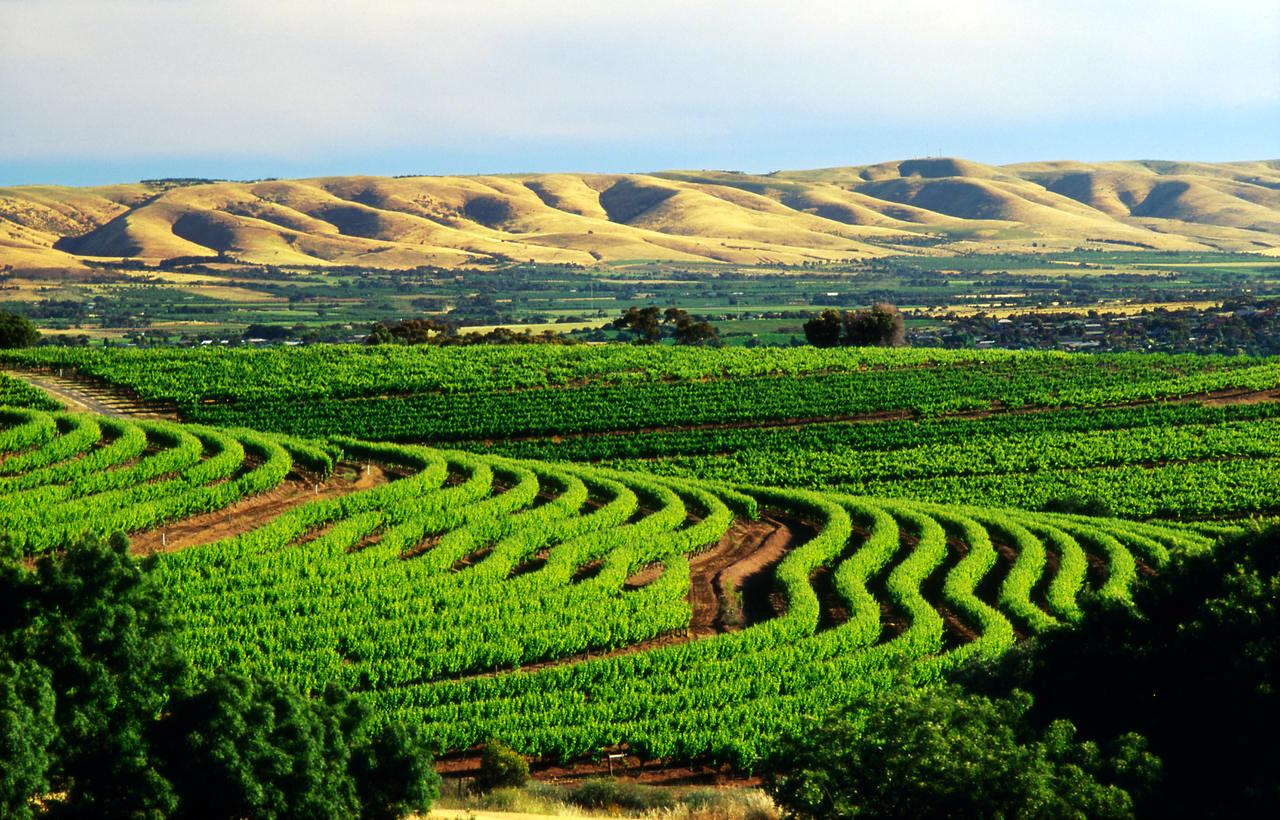McLaren vale(Multiple values)sweeping vies from samuels ridge winery