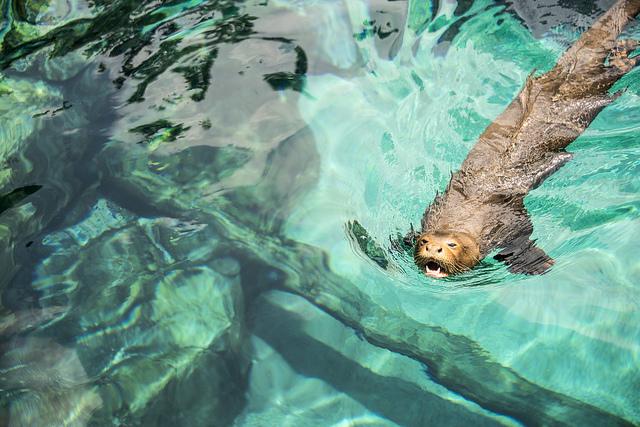 Khám phá thủy cung River Safari