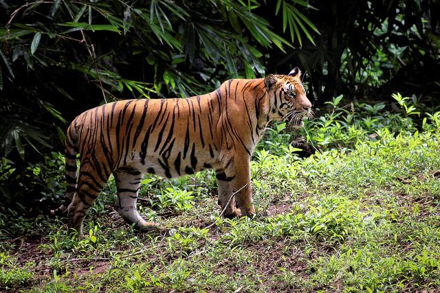 Khám phá rừng nhiệt đới ở Sumatra
