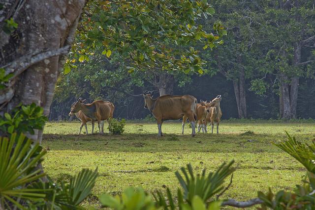 Vườn quốc gia Ujung Kulon
