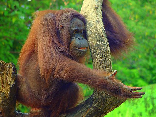 Tân Trúc - vườn thú lâu đời nhất Đài Loan