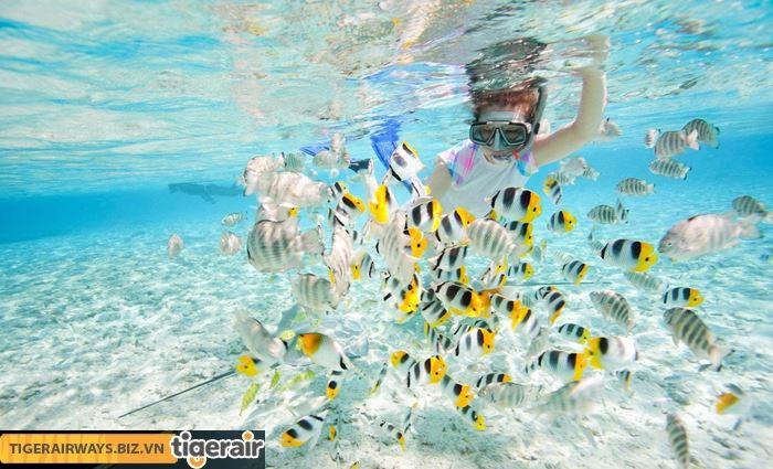 Trải nghiệm lặn biển ở Koh Rong
